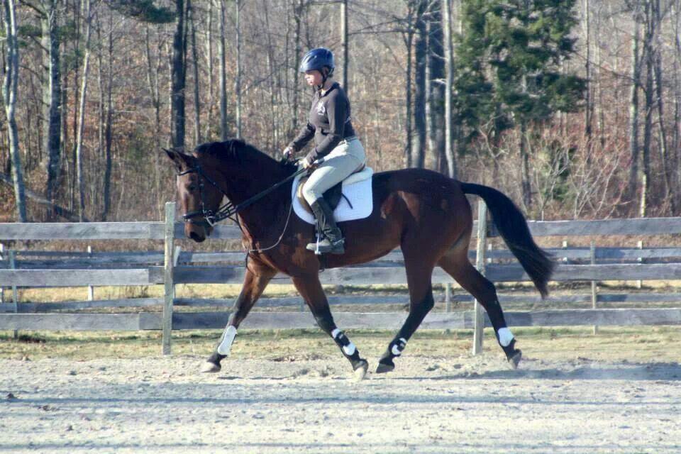 Chakola's In Style, 5yr old purebred CB mare