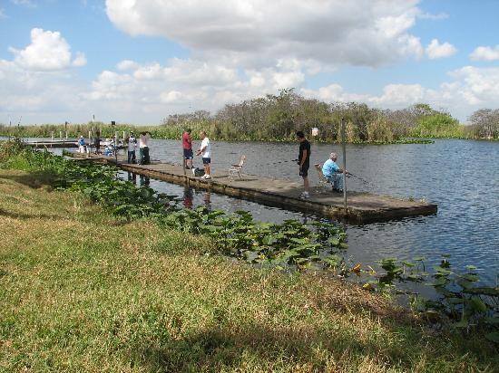 everglades in florida - Google Search