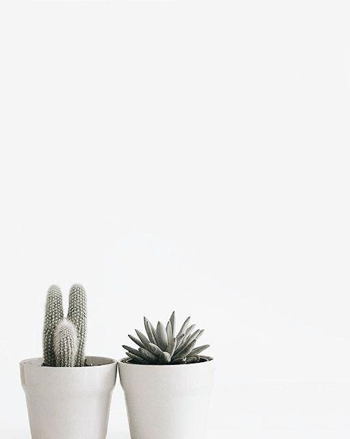 White Minimalism Pinned By Birambi Plant Aesthetic Plants Succulents Decor