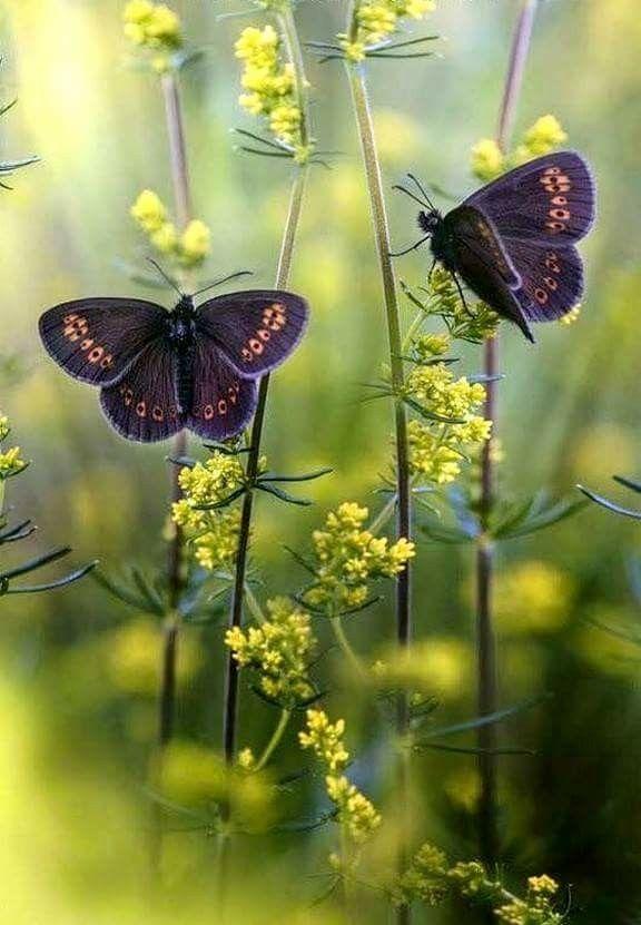 Pin Von Gabriele Haas Auf Schmetterlinge Mit Bildern