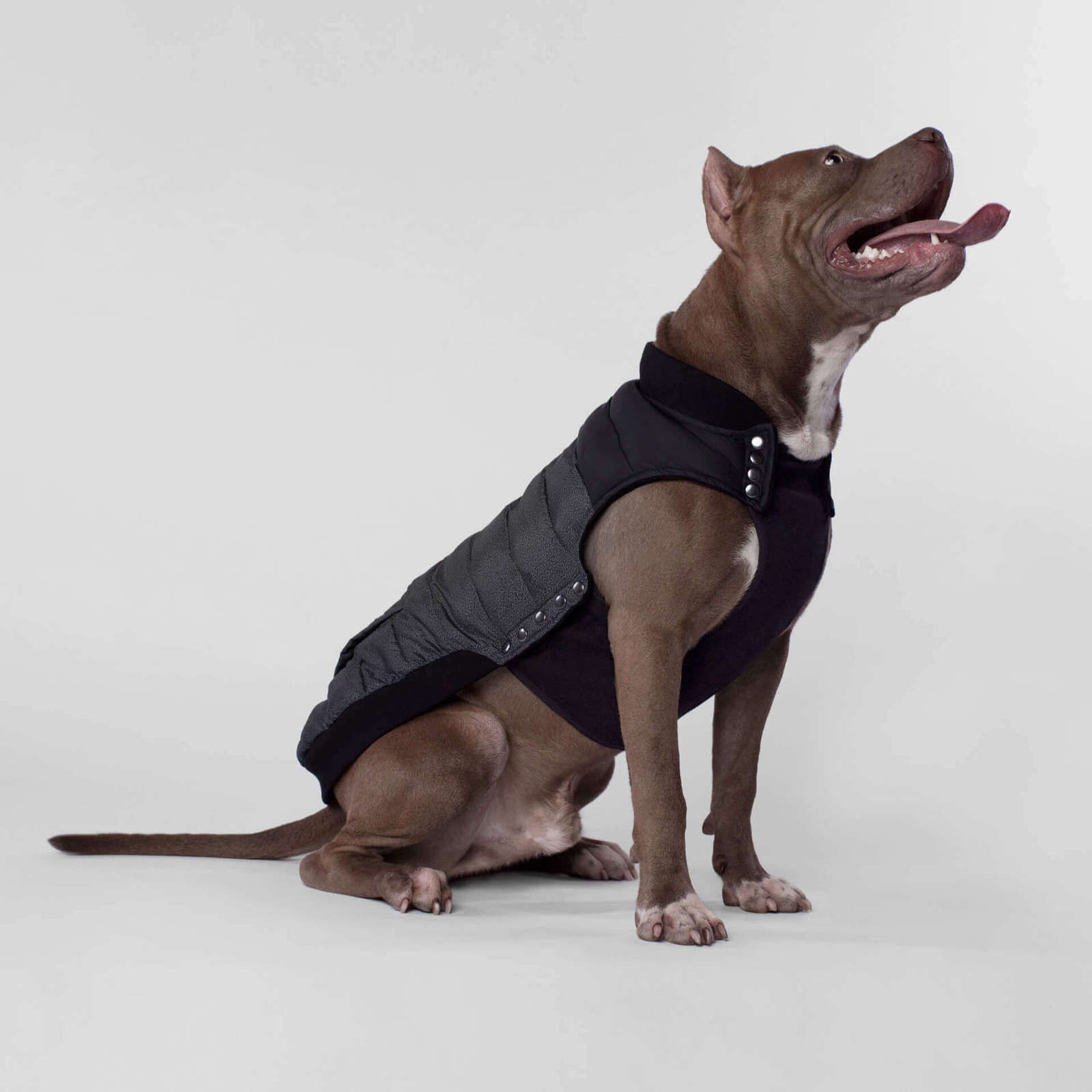 Summit Stretch Vest Outerwear Canada Pooch Dog Clothes Dogs Pooch [ 1600 x 1600 Pixel ]
