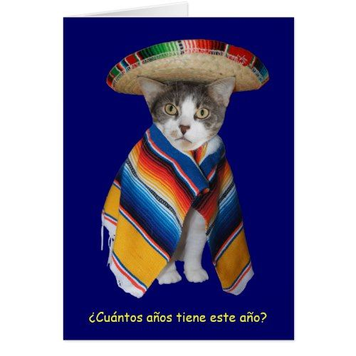 Funny Spanish Catkitty Birthday Card Pinterest Funny Spanish