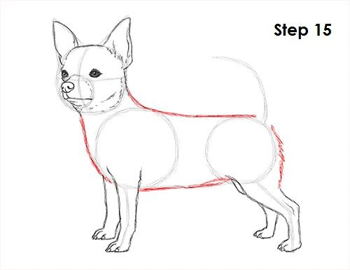 How To Draw A Chihuahua Animal Drawings Chihuahua Art