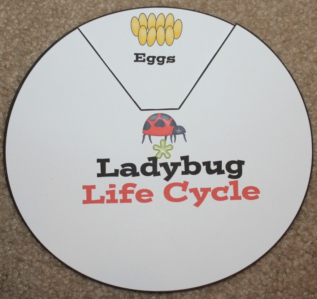 Ladybug Life Cycle Activities Amp Printables