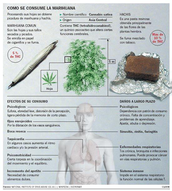 Los efectos de la #marihuana sobre el organismo. #salud ...