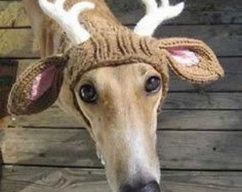 Pdf Knitting Pattern For A Reindeer Antler Hat For Dogs Instant Download Crochet Cao Caes Bonitos Animais Bonitos