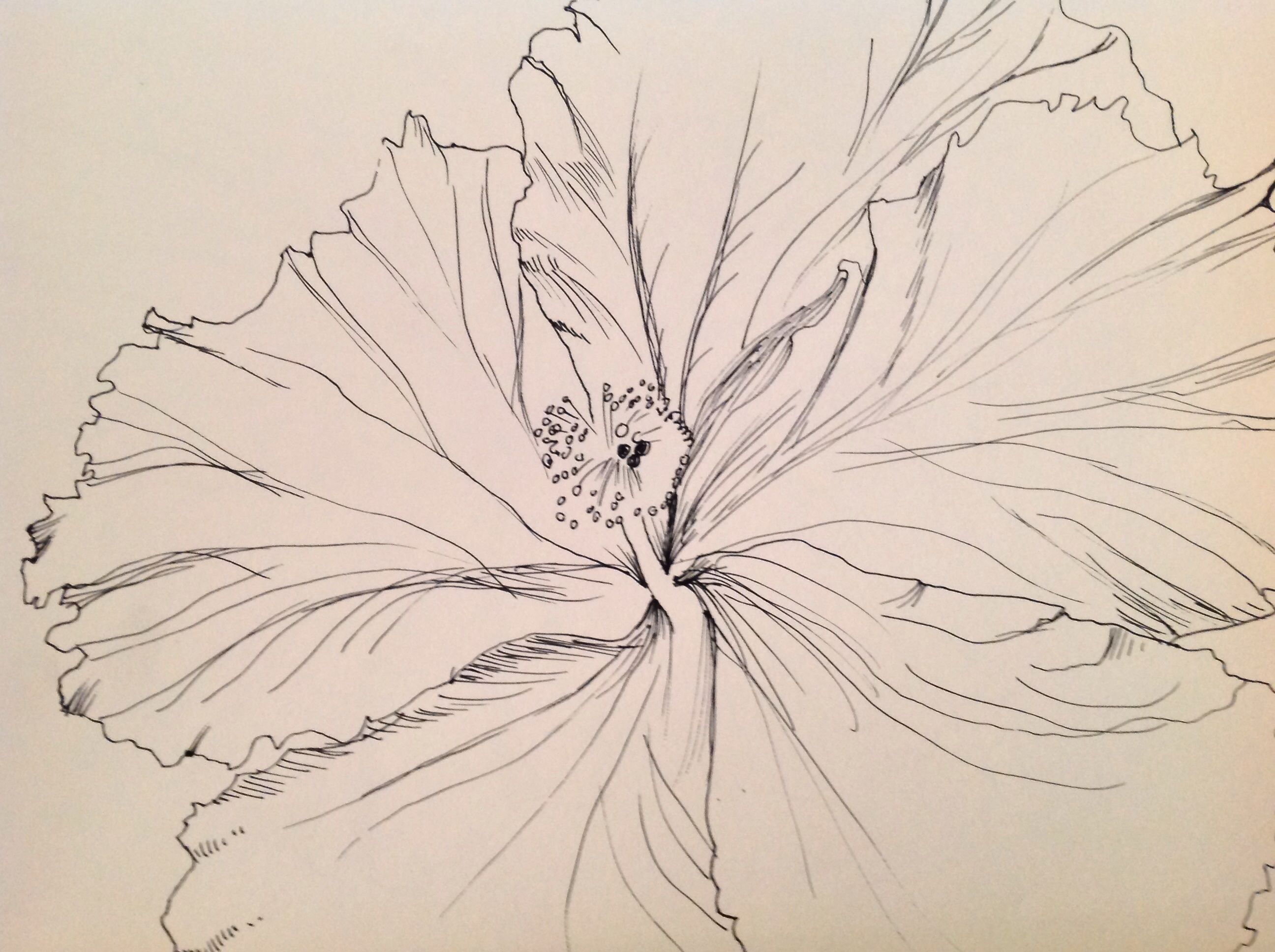 Image41g Line Drawings Pinterest Flower Drawings Drawing