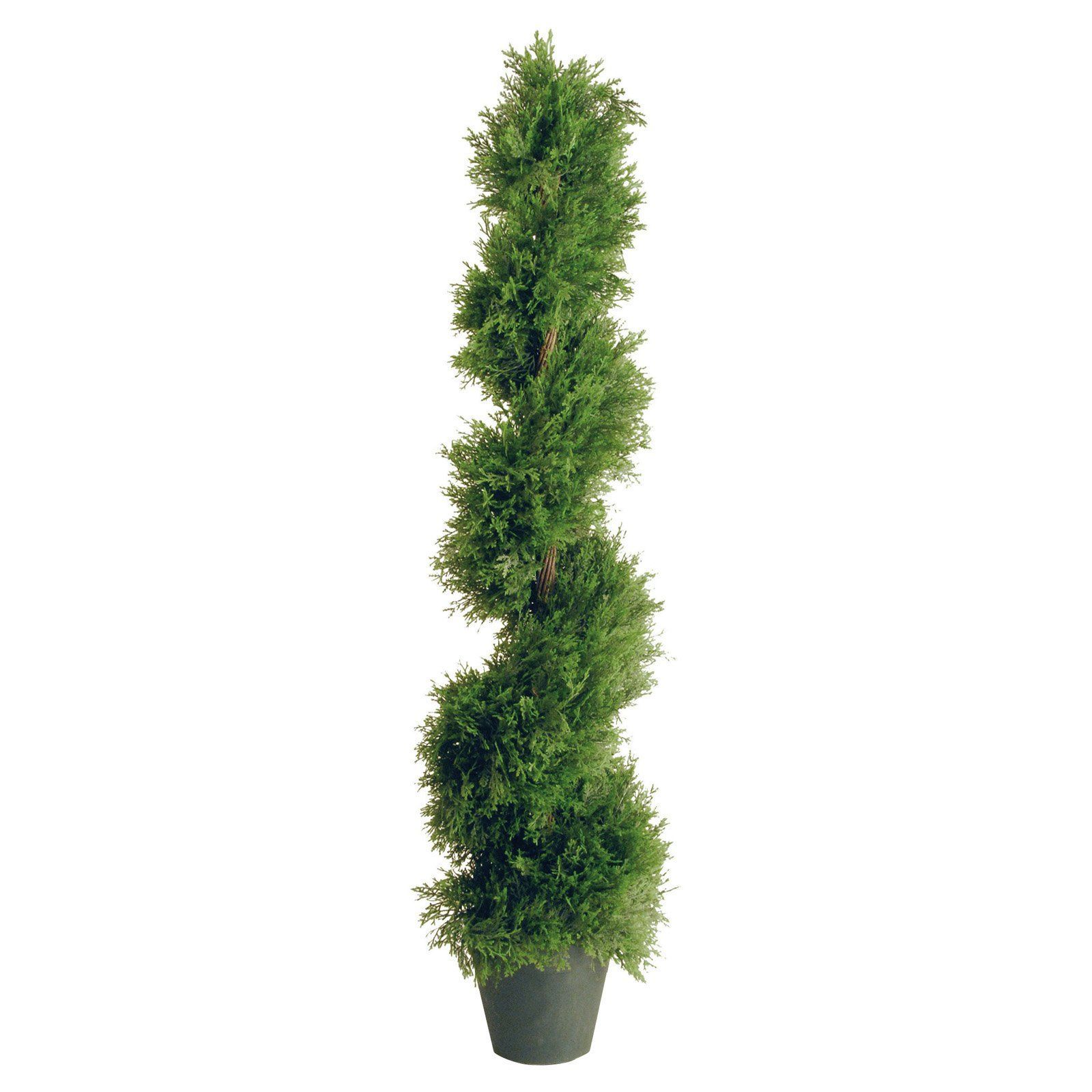 48in. Juniper Slim Spiral with Green Pot (With images