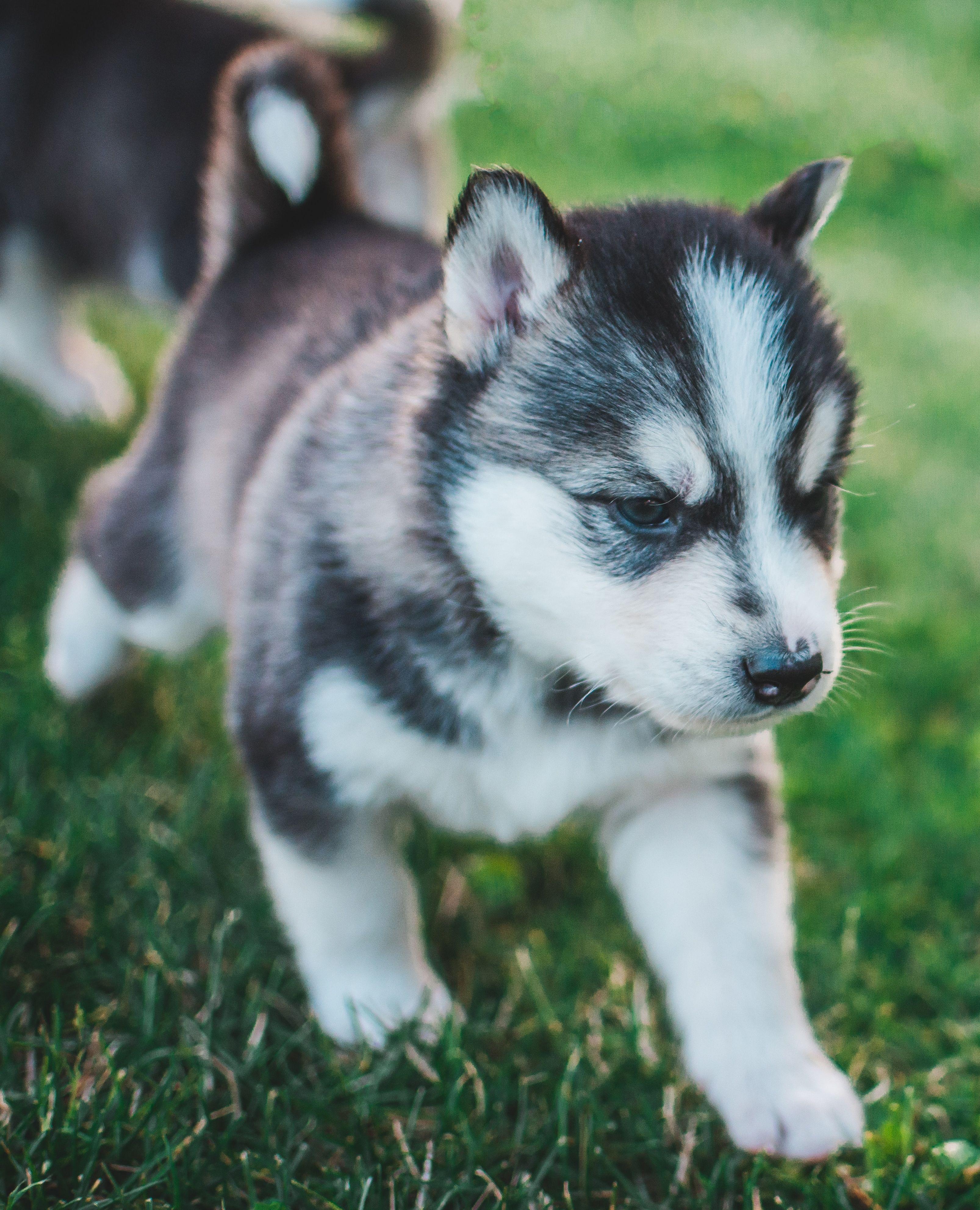 Top 5 Rules For Choosing The Best Pet Hotel Super Cute Puppies Cute Puppies Super Cute Dogs