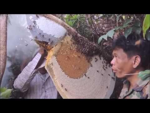 สุดยอด!! เทคนิค  วิธีการ ตีผึ้งหลวง  How to remove a bee