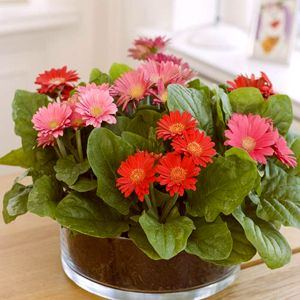 Buy Home And Garden All Flowering Plants Online From Nurserylive At Lowest Price Planting Flowers Plants Summer Plants