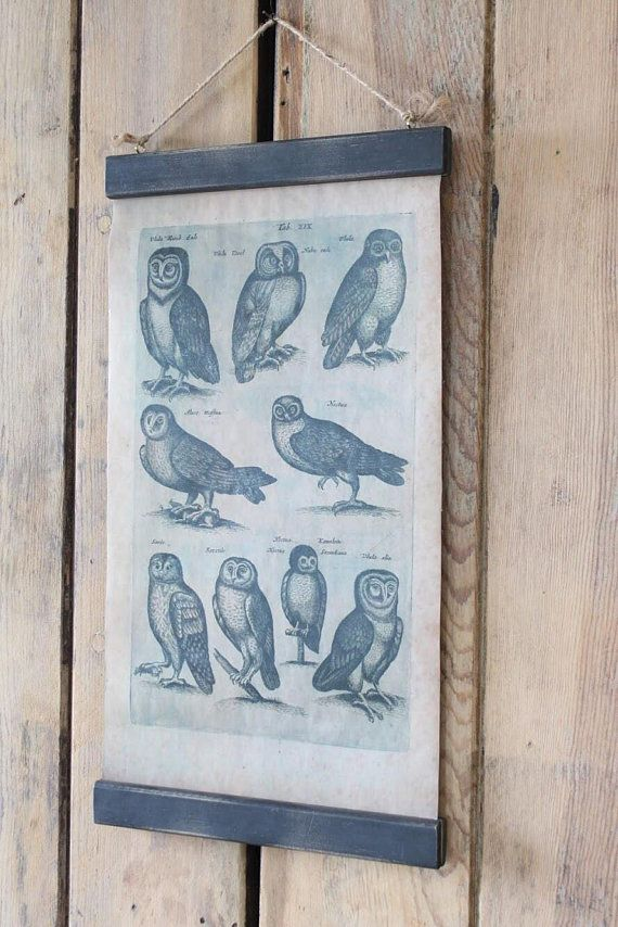 Vintage owl print reproduction wall chart paper and fabric botanical science style also rh pinterest