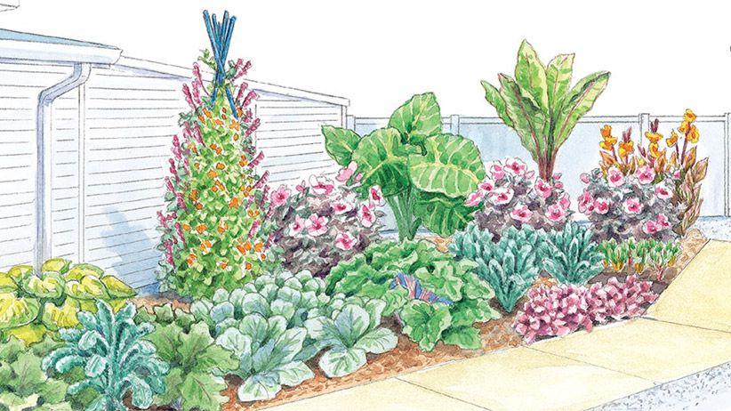 The Directional Challenge Edible Garden Plants Garden
