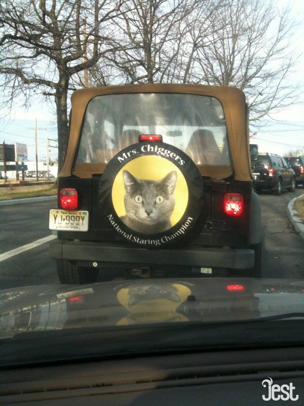 Cat Spare Tire Cover Its A Jeep Thing Pinterest Funny Funny
