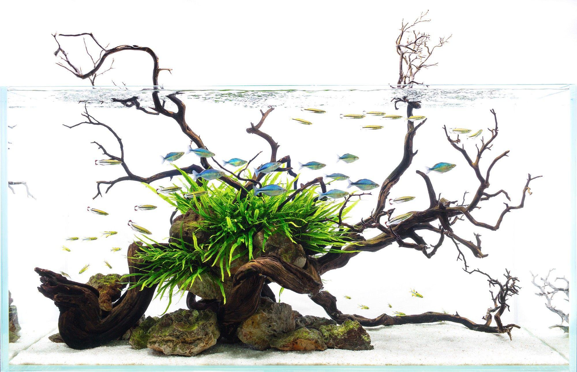 2a703ce529549a89cb1a084069ee02ad Frais De Aquarium En Bois Schème