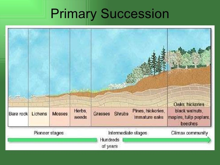 7 Primary Succession Soil Food Web Pinterest Ecological