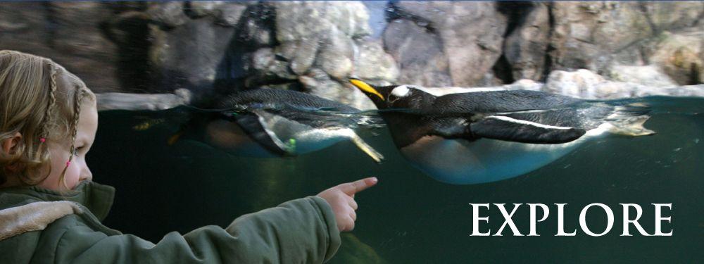 The Living Planet Aquarium | South salt lake, Lake, Trip
