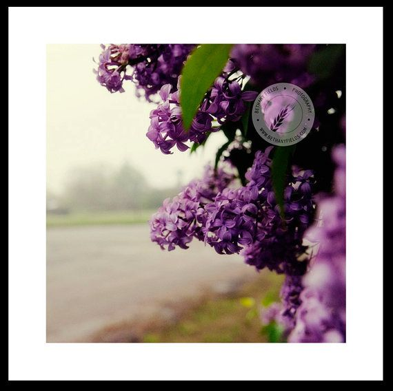 Lilac This Would Be Nice In My Lilac Colored 1 2 Bath Fine Art Photography Art Photography Fine Art