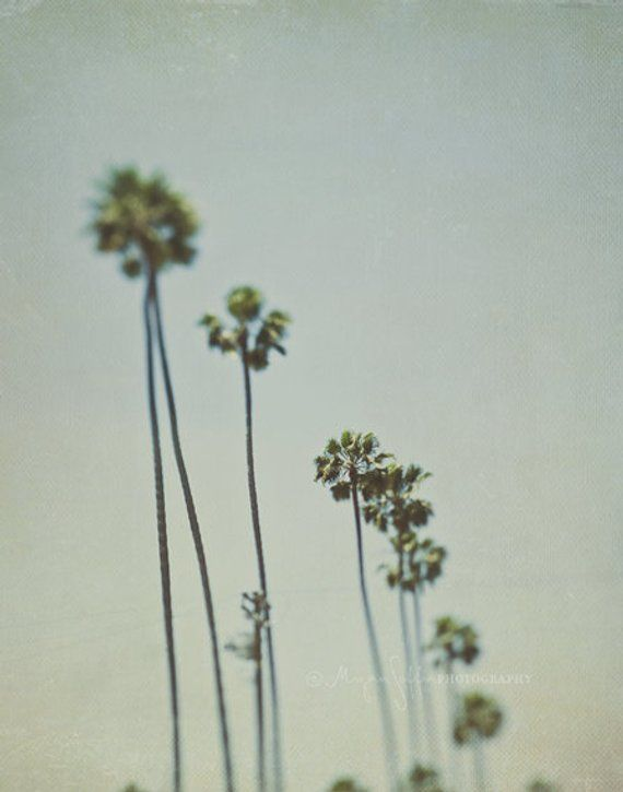 Los Angeles Photography Large Photograph Wall Art Travel Photo California Palm Trees La Land