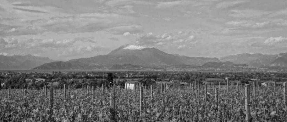 Wine tasting in Lake Garda at Citari - Things To Do In Lake Garda