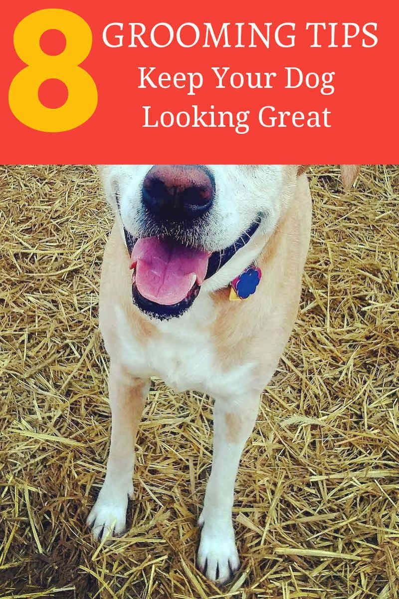 Grooming Your Dog At Home Dog Groomers Dogs