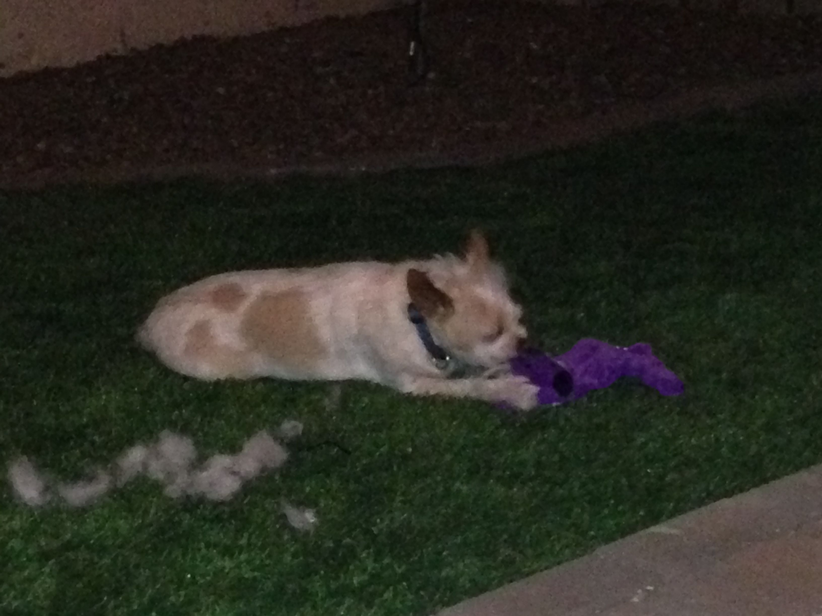 "My dog now enjoys ""killing"" his toys outside in our new yard"