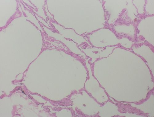 Pin By Chantal Stidsen On College Anatomy Study Tissue