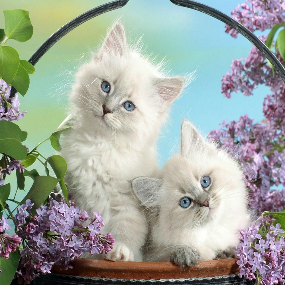 Retro White Cat Kitten Pair Flower Garden Kitty 2 Side Pillow Cushion Cover 18 Kittens Cutest Cute Animals Kitten Wallpaper