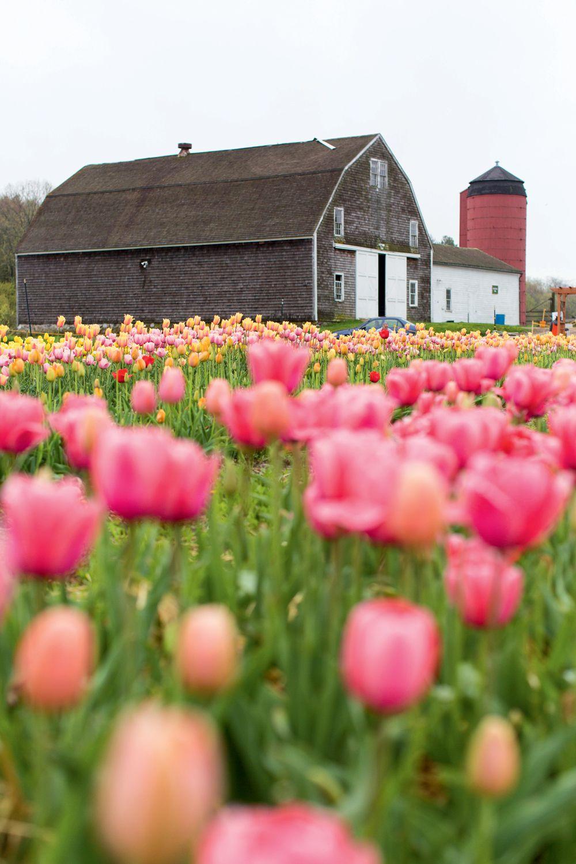 The Best 5 Flower Farms In New England Flower Farm Rhode Island New England
