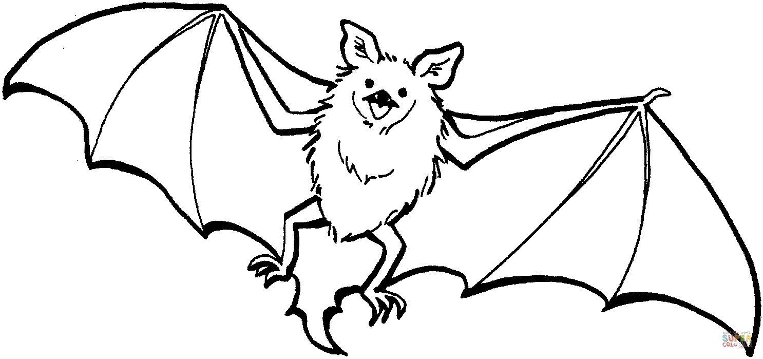 Fledermaus Malvorlagen