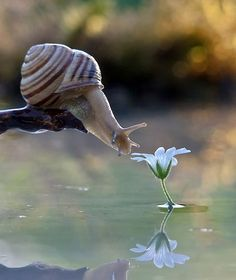 Fantastic picture! The slow rhythm of nature...