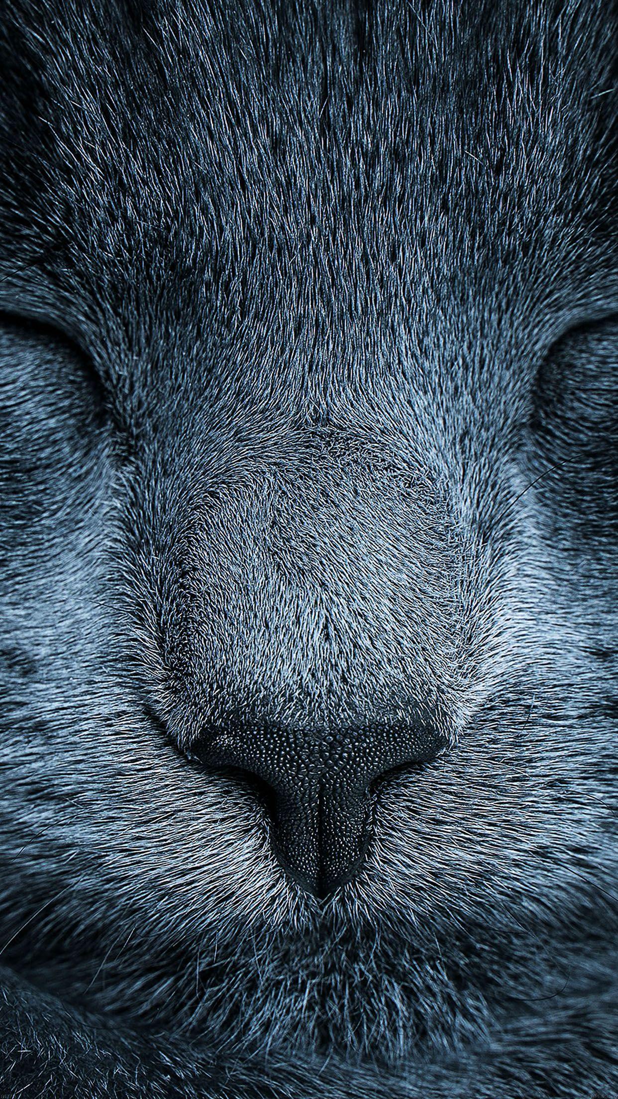 Iphone Ios 7 Wallpaper Tumblr For Ipad Animals Cats Blue Cats