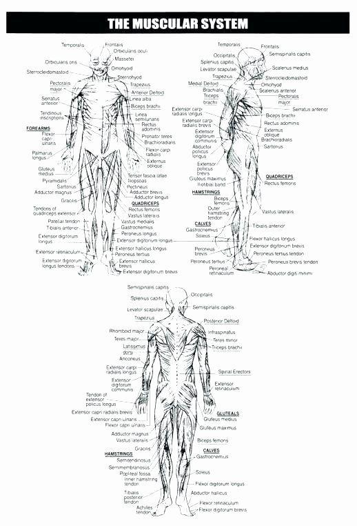 Heart Diagram Worksheet Blank Muscle Fill In the Blank ...