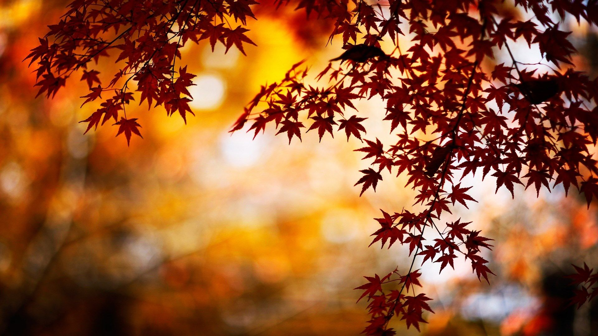 Fall Desktop Backgrounds Images Desgins Osennie Kartinki Fonovye Izobrazheniya Osennie Fotografii