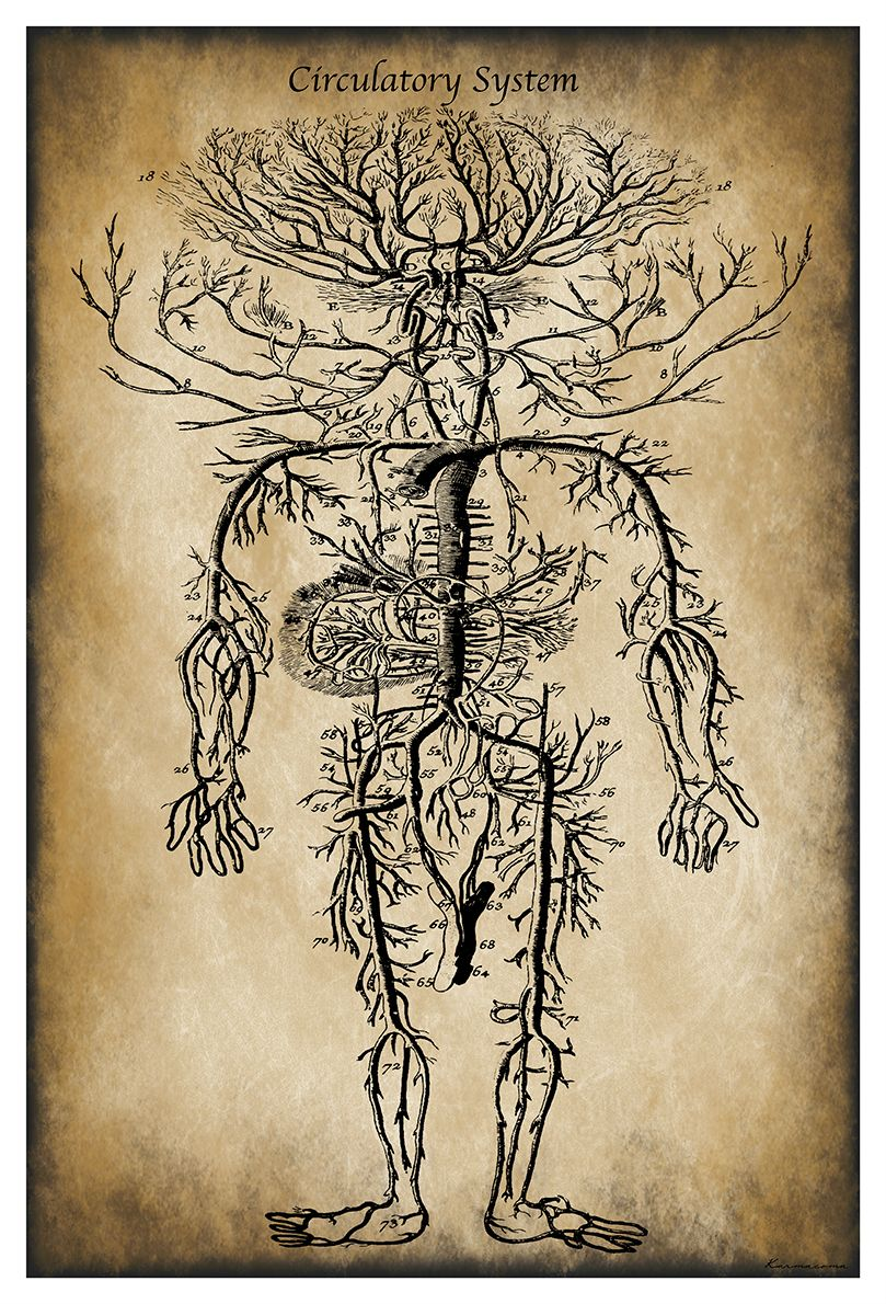 Tree of Life: Interpretive sketch from an authentic 19th C vintage ...
