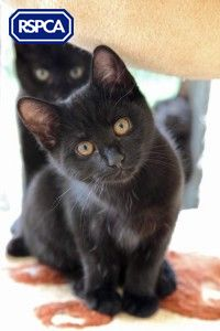 Halloween Special We Love Black Cats With Images Cats And