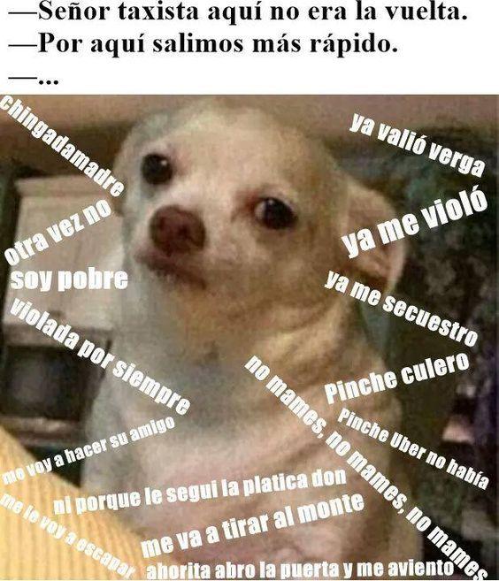 Memes Perro Chihuahua Enojado Google Search Funny Spanish Memes Funny Memes Memes