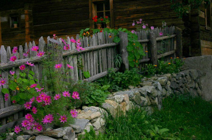 Zaunbepflanzung Garden