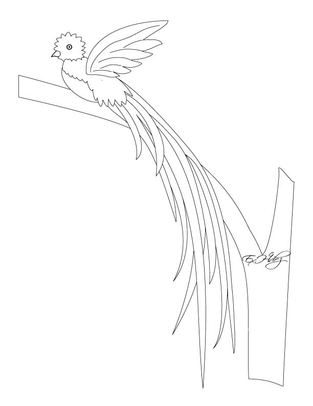 Guatemala National Bird The Quetzal Downloadable Coloring Page
