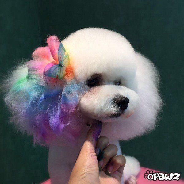 opawz dog hair dye rainbow grooming