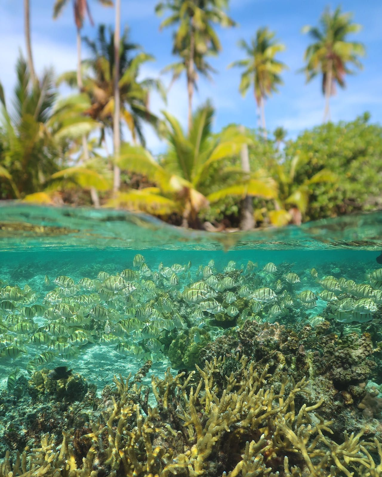 10 Reasons To Visit French Polynesia