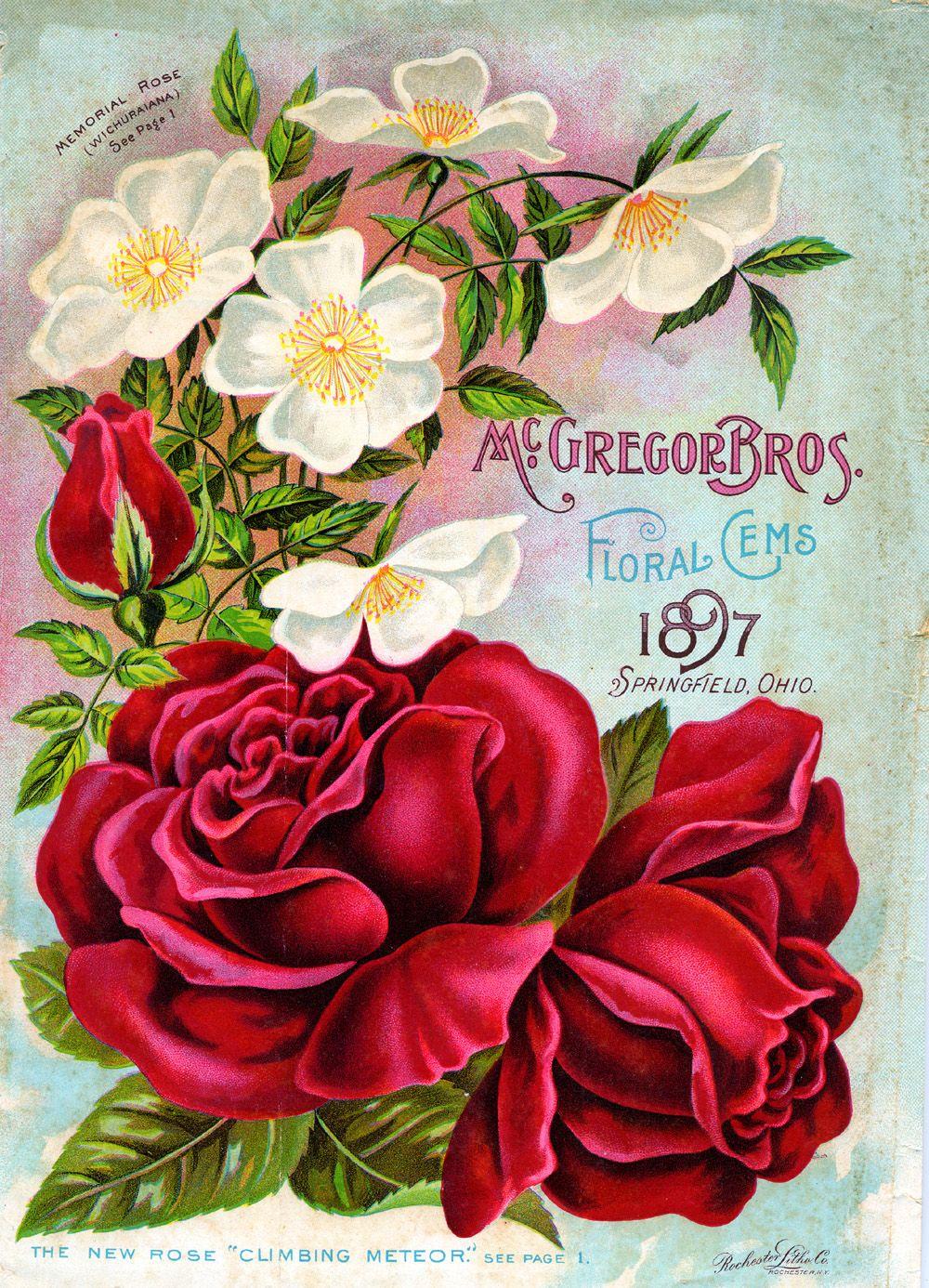 Vintage Antique Gul Posterleri 61 Adet Guller Poster Mail Art