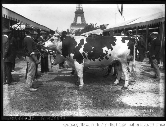 16 6 11 concours agricole vache normande photographie de presse agence rol 1 - Vache normande dessin ...