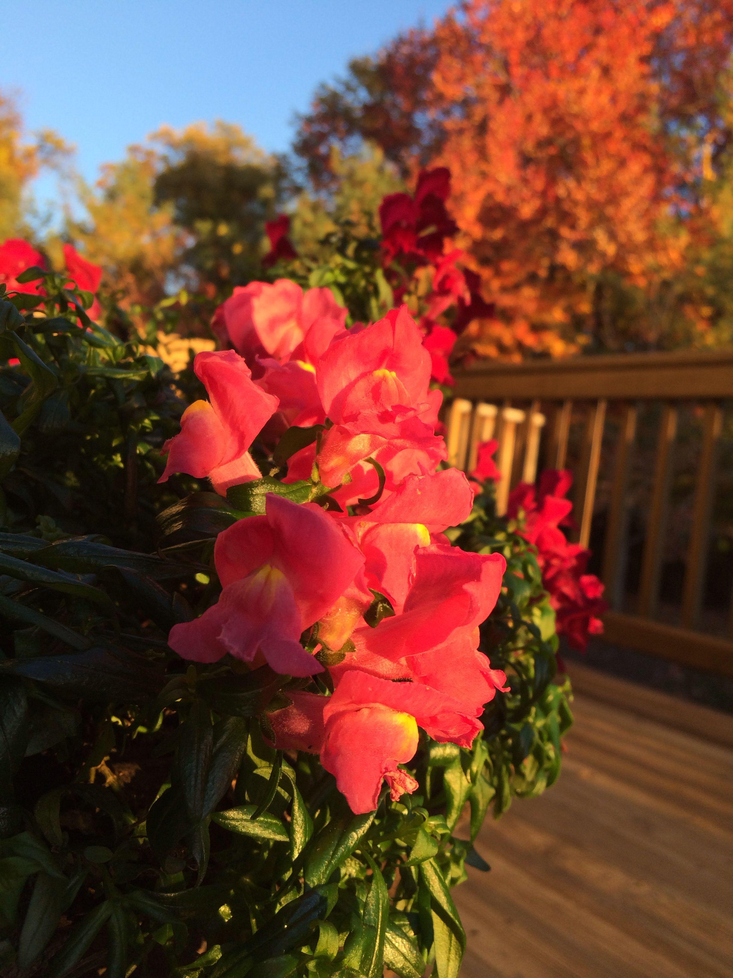 Nov bloom Plants, Flowers, Bloom