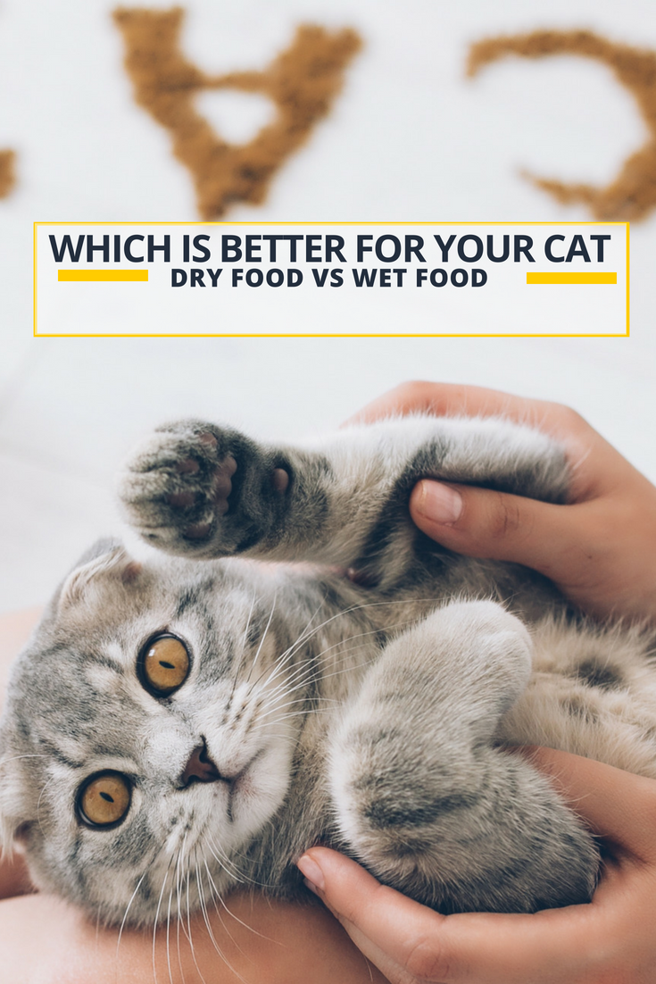 Which Is Better For Your Cat Dry Food vs Wet Food Cats