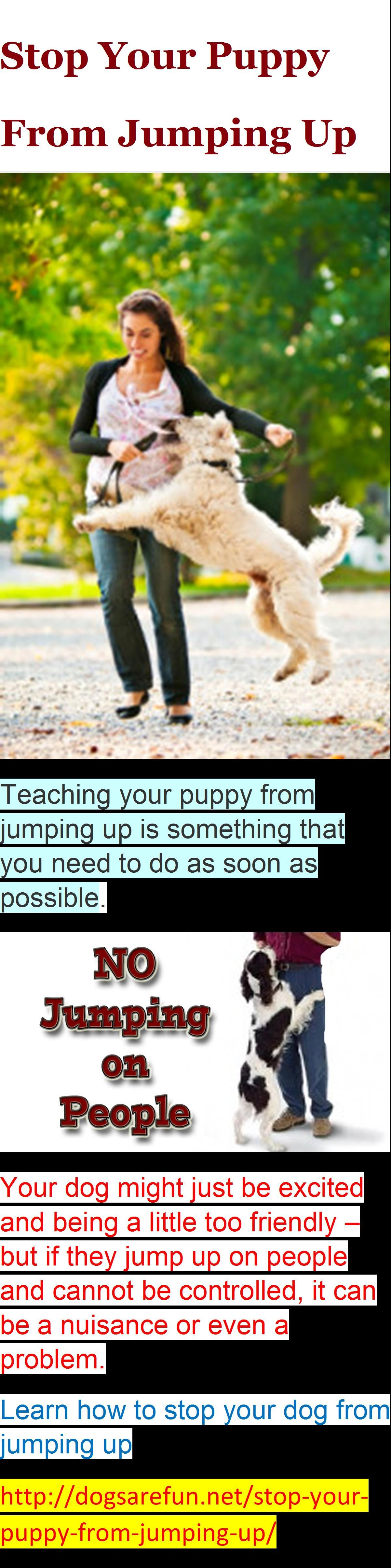 Stop Your Puppy From Jumping Up Dog Training Shared By