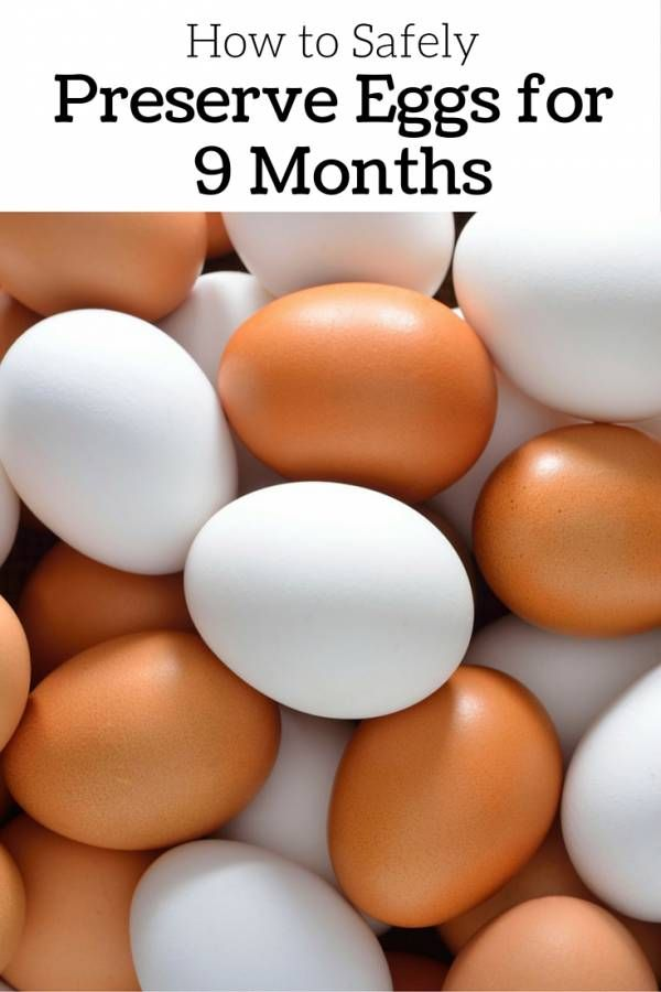 If you are domesticating your own brood of chickens, you are fully aware that you should preserve eggs to last for 365 days, depending on the family's consumption. Preserving eggs for 9 months is impossible for some people. How to do it? Click the link below to find out how …