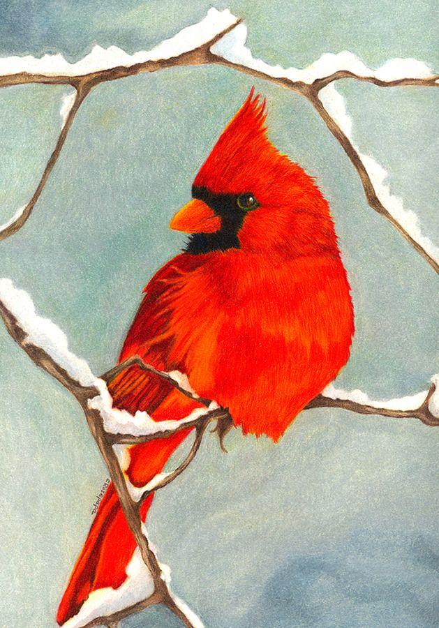 Red Cardinal In Winter Antique Bird Illustration Canvas