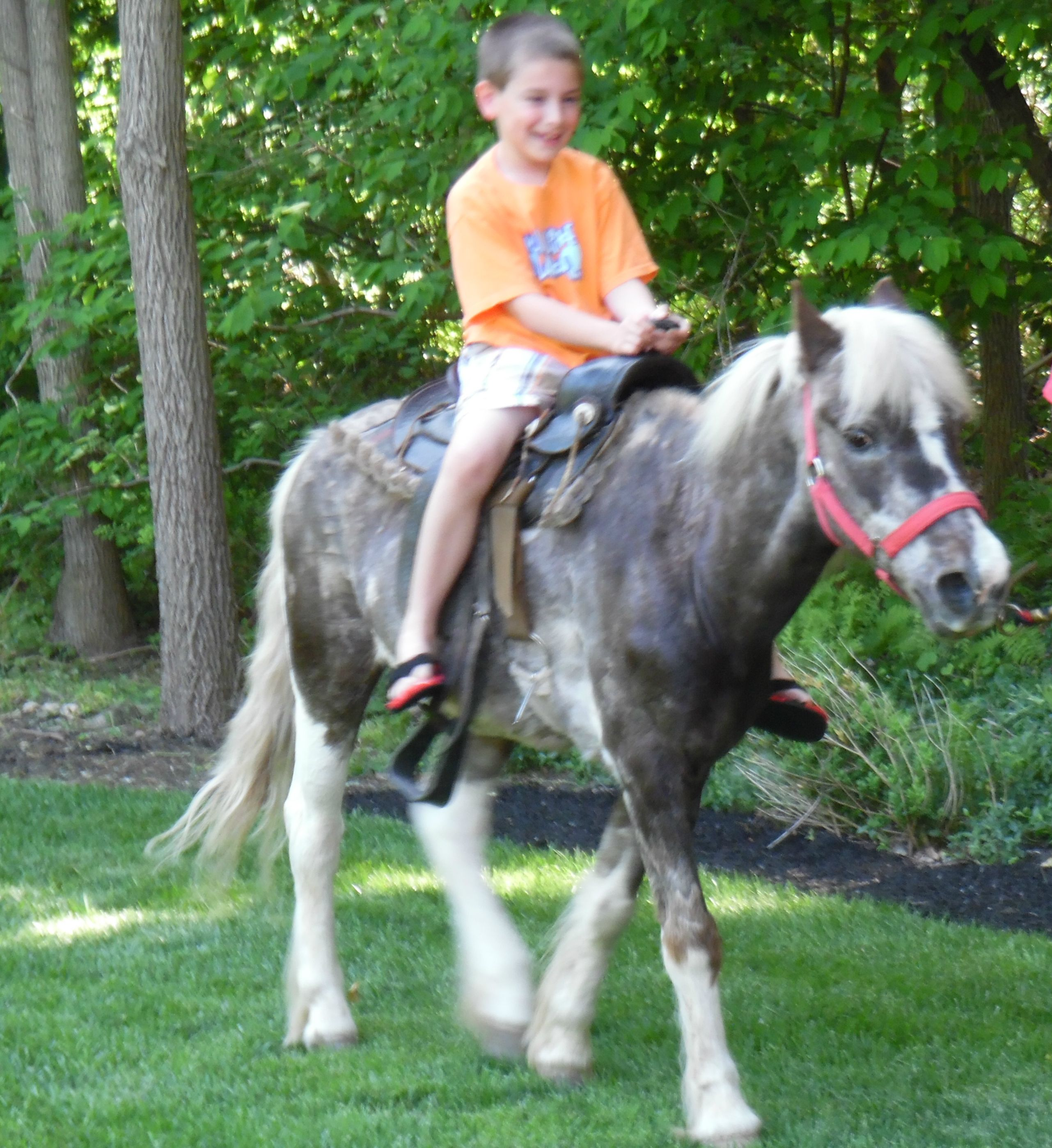 Private back yard birthday with pony rides. New Jersey