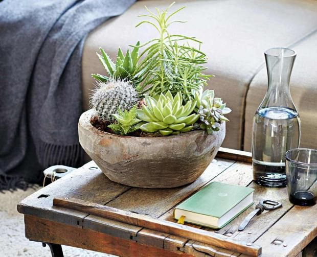 Seculents And Table Styling Best Plants For Bedroom Planting Succulents Plants